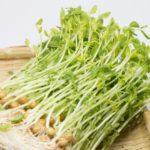 ヒルナンデス!【豆苗レシピ 冷やし中華&豆苗のたまとろチリソース】