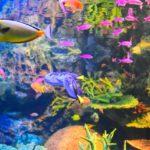 東京都内の水族館!子連れで楽しむ子供向けおすすめスポット!