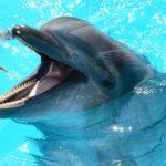 東京都内の水族館でイルカショーを観るならここ!おすすめポイントも紹介!