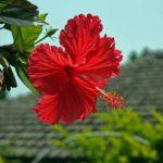 たけしの家庭の医学!竹富島の血管若返り法を紹介!8月14日