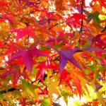 【2019年】11月の開運カレンダー・誕生石・記念日・イベントをご紹介!